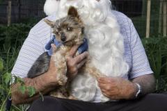 Santa Jack, Georgetown Santas | 2012